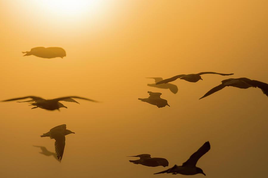Gulls in Golden Fog by Robert Potts