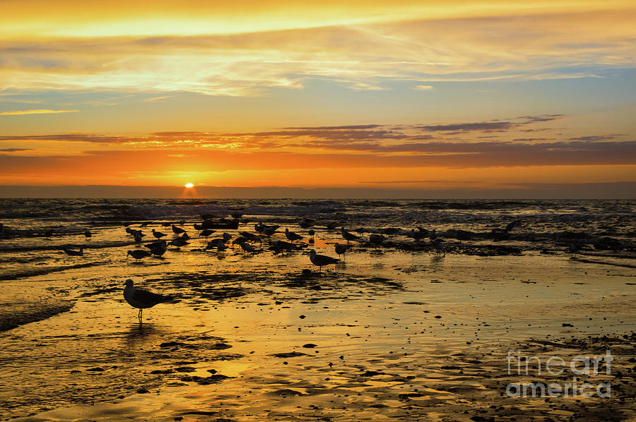 Gulls in the sunset by Angela Doelling AD DESIGN Photo and PhotoArt