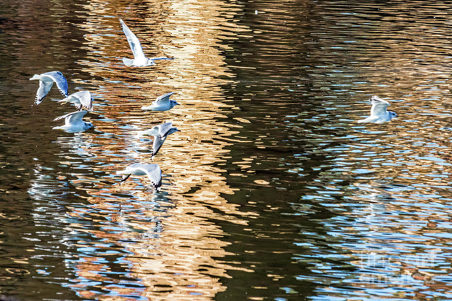 Gulls Over Reflections by Kate Brown