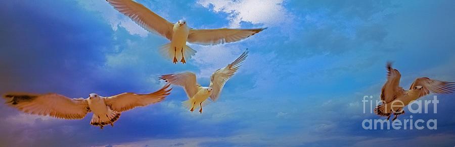 gulls, stop, action,  by Tom Jelen