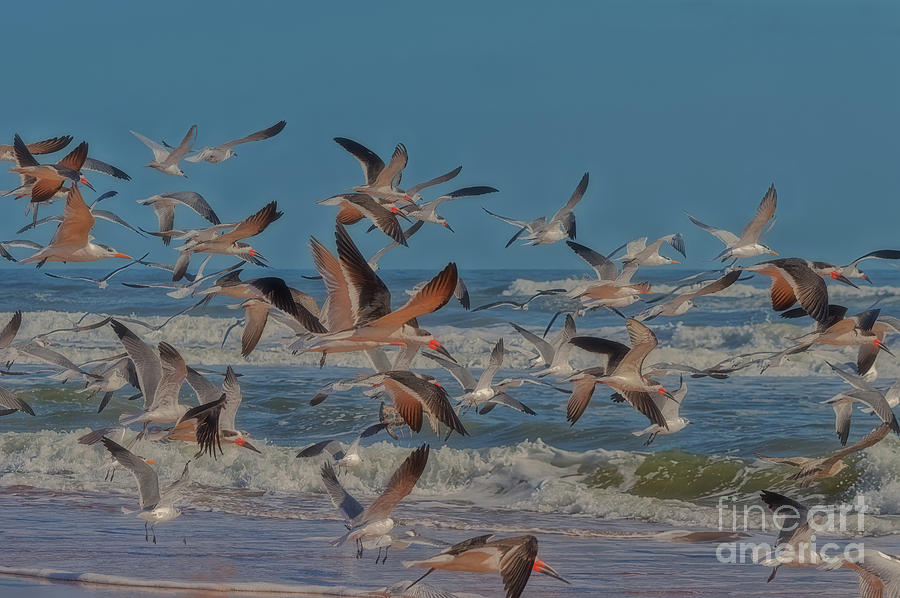 Gulls, Terns and Skimmers Taking Flight - 7262 by Marvin Reinhart