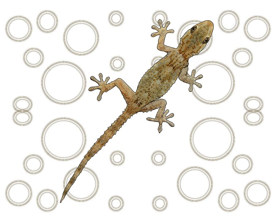 Stratton Digital Art - H Is For House Gecko by Joan Stratton