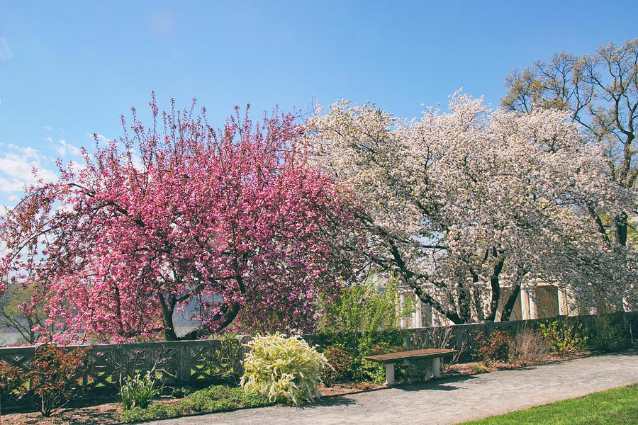 Untermyer Garden Photograph - Springtime At Untermyer Park by Jessica Jenney