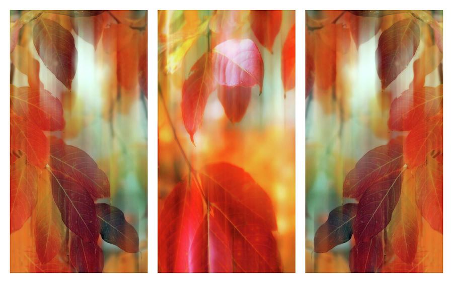 Leaves Photograph - Lingering Leaves Triptych II by Jessica Jenney