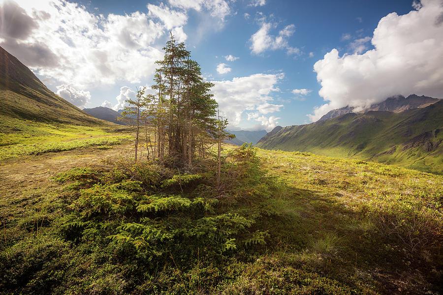 Alaska Photograph - Haiku Forest by Tim Newton