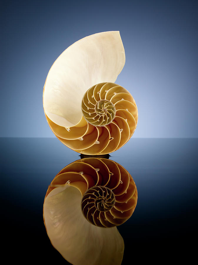 Half A Nautilus Shell In A Pool Of Water Photograph by Chris Stein