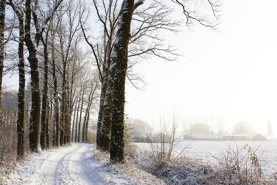 Half Black, Half White Photograph by Bob Van Den Berg Photography