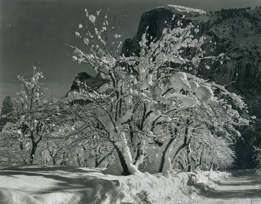 Half Dome, Apple Orchard, Yosemite Photograph by Archive Photos