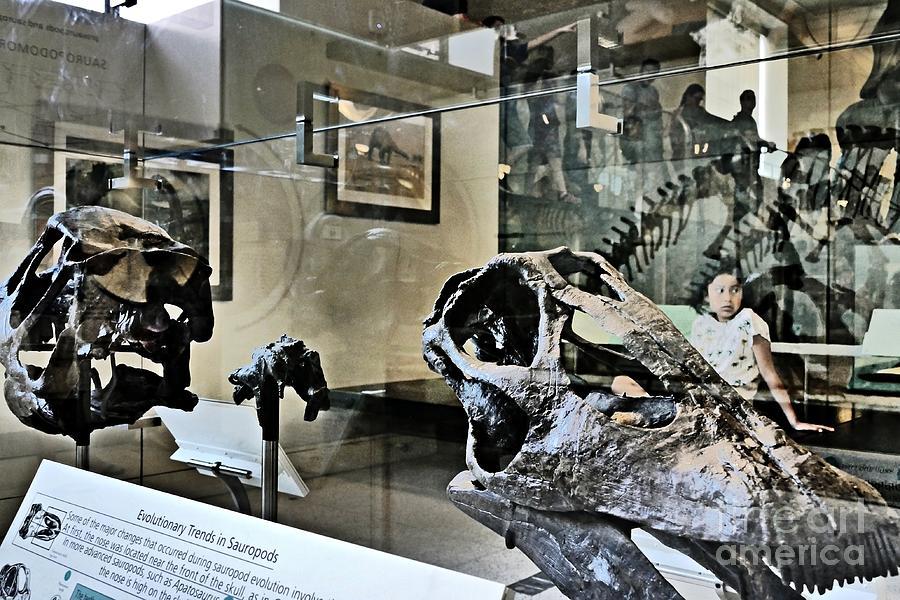 Hall Of Dinosaurs 2 Photograph