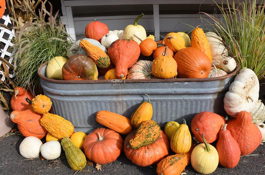 Pumpkins Photograph - Halloween 240 by Joyce StJames