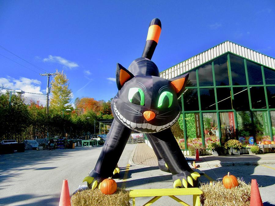 Halloween Cat by Stephanie Moore