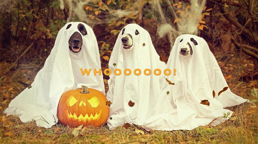 Halloween Hounds Photograph
