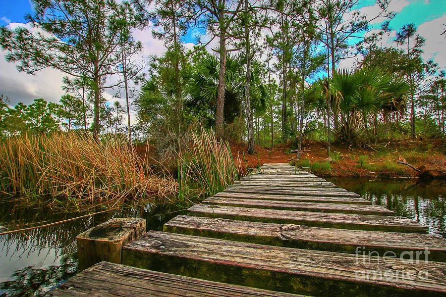 Halpatiokee Footbridge by Tom Claud