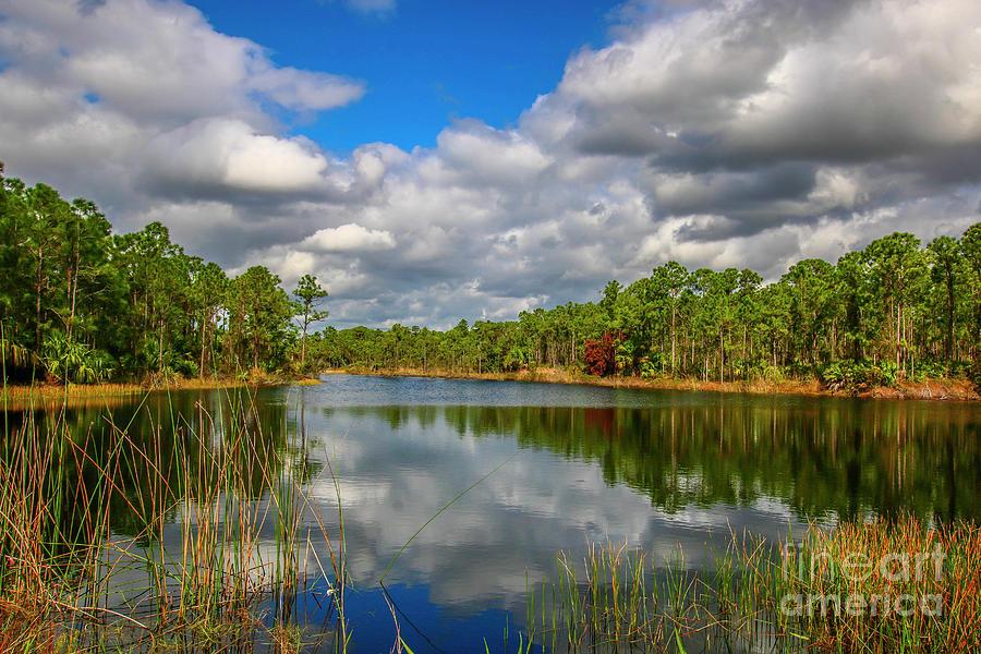 Halpatiokee Lake View #3 by Tom Claud