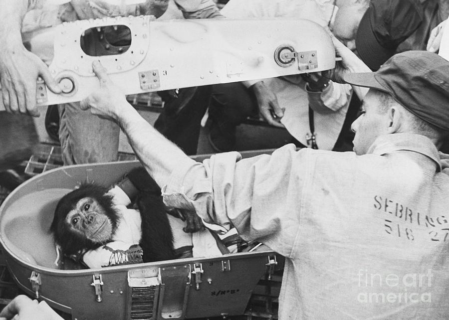Ham The Space Chimp After Space Flight Photograph by Bettmann