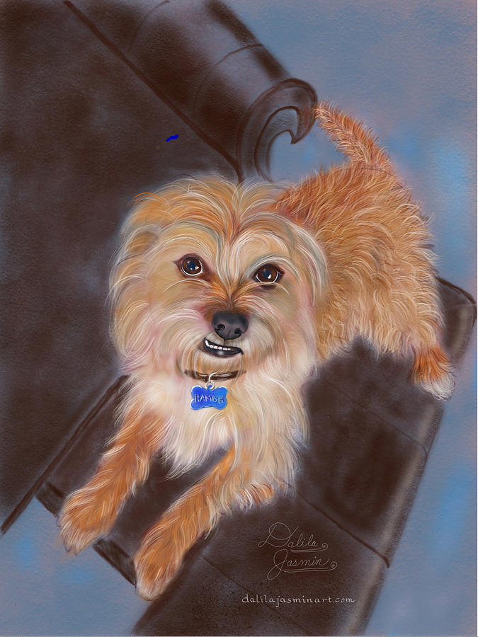 Dog Digital Art - Hamish by Dalila Jasmin