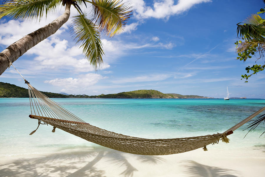 Hammock Between Palm Trees On Untouched Photograph by Cdwheatley