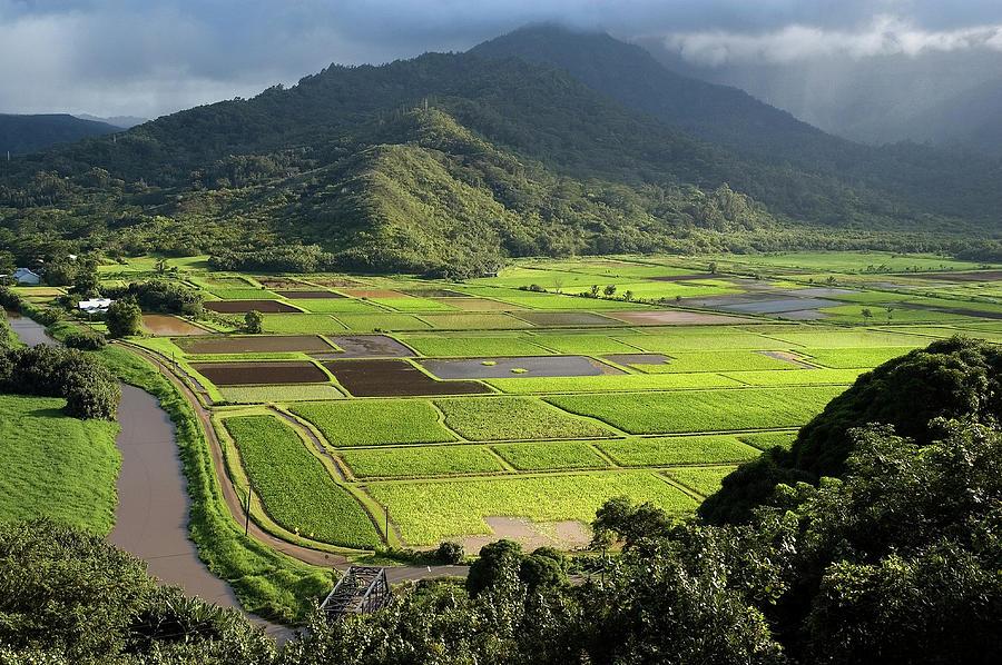 Hanalei Valley With Taro Fields Below Photograph by John Elk Iii