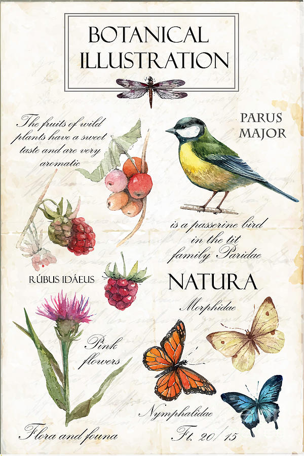 Fruit Digital Art - Hand Drawn Botanical Illustration by Yana Fefelova