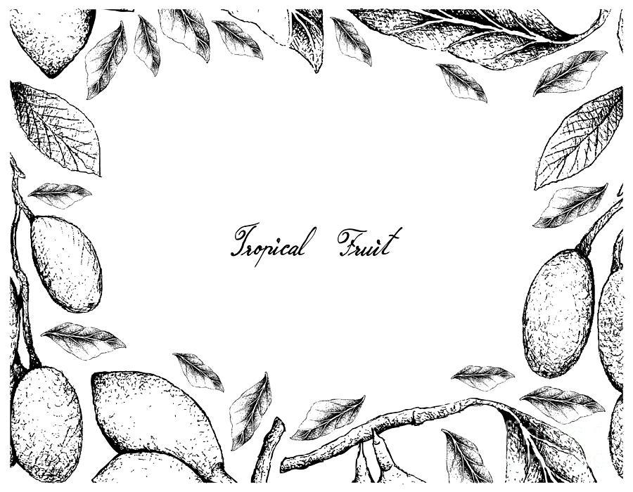 Hand Drawn Frame Of Elaeocarpus Hygrophilus And Curriola Fruits Drawing
