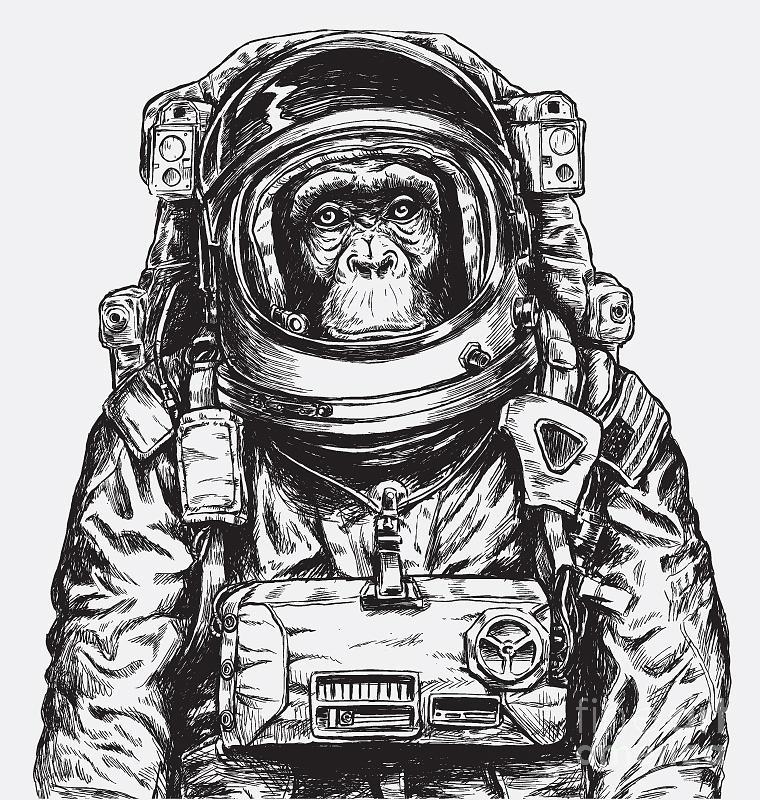 Monkey Digital Art - Hand Drawn Monkey Astronaut Vector by Tairy Greene