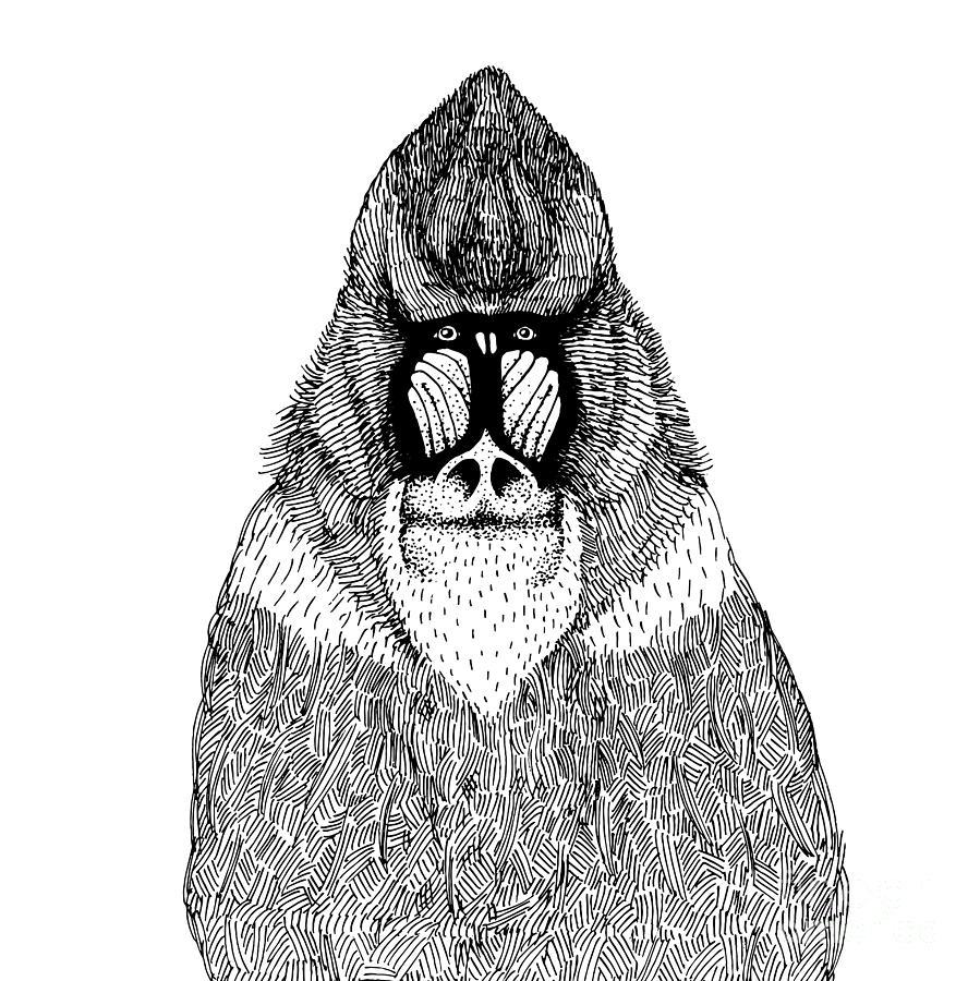 Fur Digital Art - Hand Drawn Vector Illustration With An by Dariaroozen