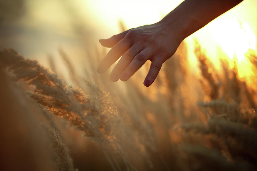 Hand In A Field Photograph by Aleksandarnakic