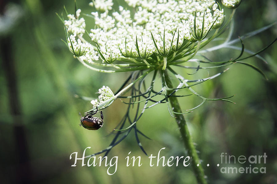 Hang In There by Sharon McConnell