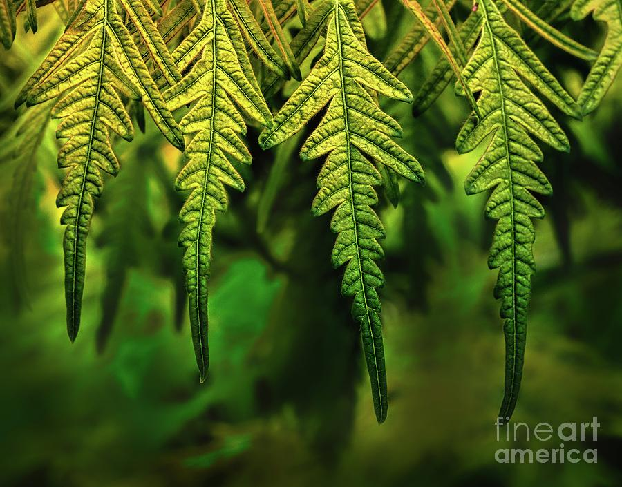 Hanging Leaves by Joseph Miko