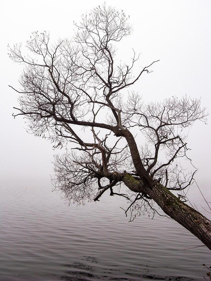 Hanging over water by Anders Kustas