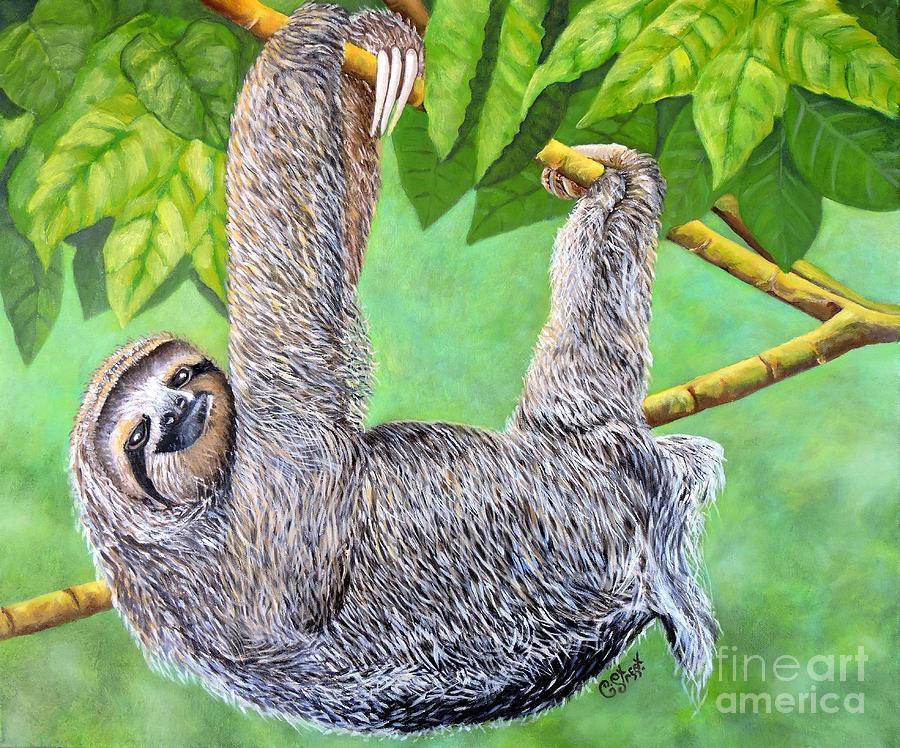 Hanging Sloth by Caroline Street