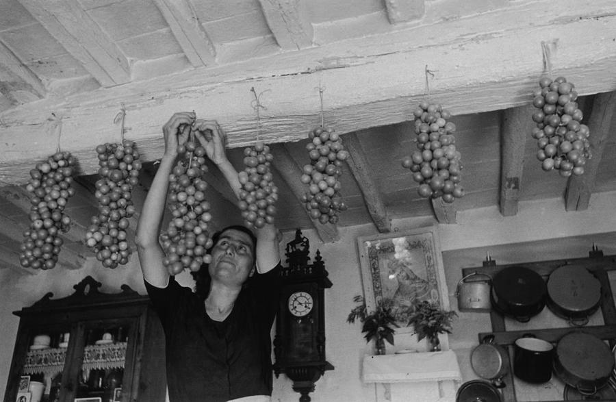 Hanging Tomatoes Photograph by Haywood Magee