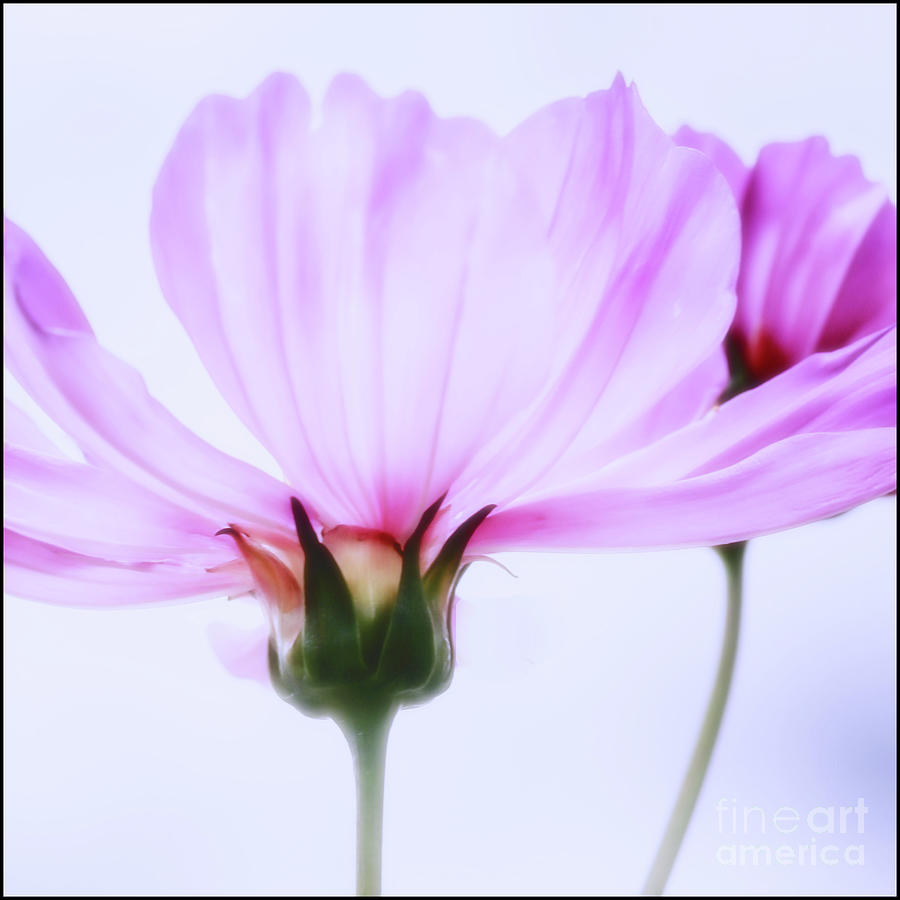 Happy All The Day by Natural Abstract Photography
