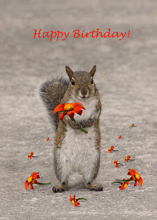 Happy Birthday from Squirrel by Zina Stromberg
