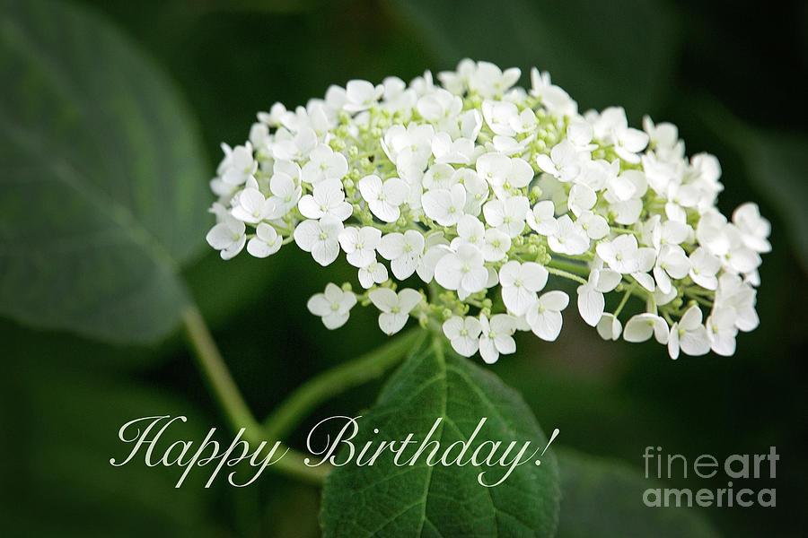 Happy Birthday White Hydrangea by Sharon McConnell