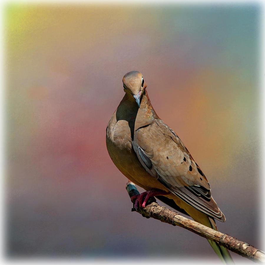 Happy Dove by Cathy Kovarik