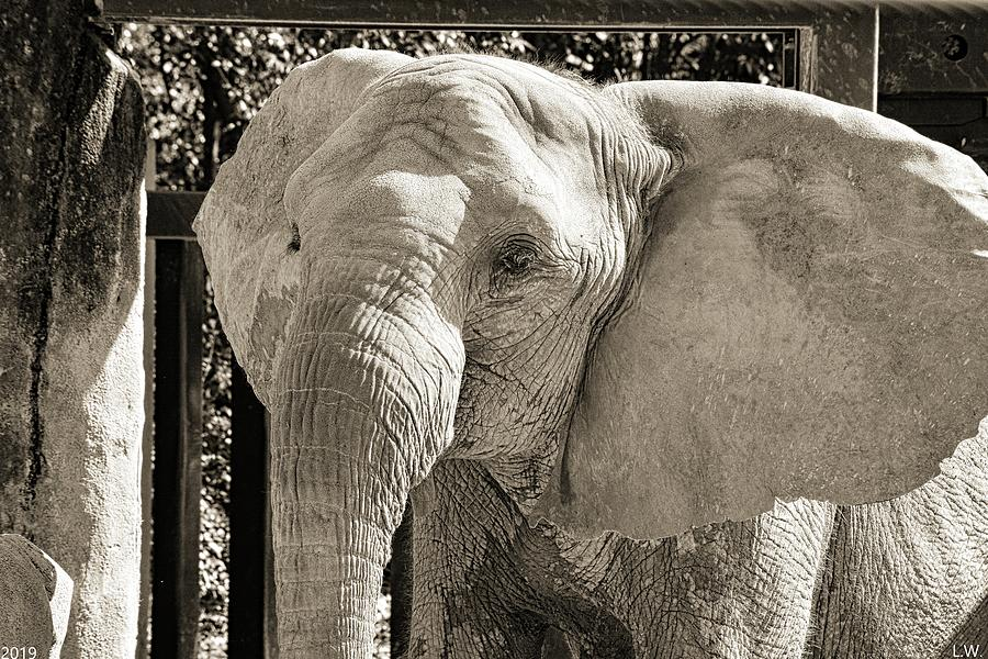 Happy Elephant Black And White by Lisa Wooten