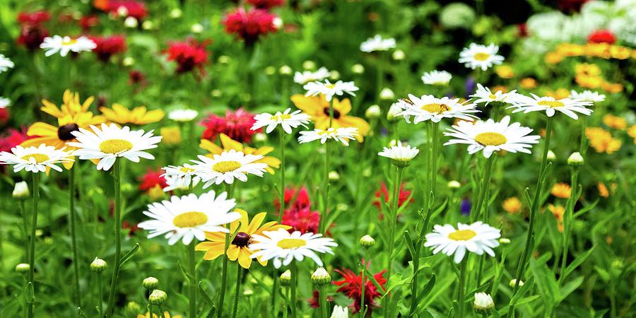 Happy Garden by Joe Kopp