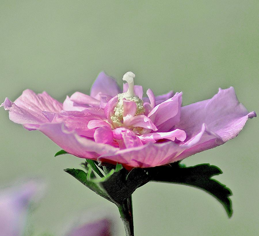Flower Photograph - Happy by Gillis Cone