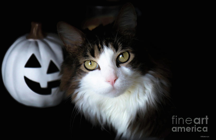 Happy Halloween Cat by Veronica Batterson