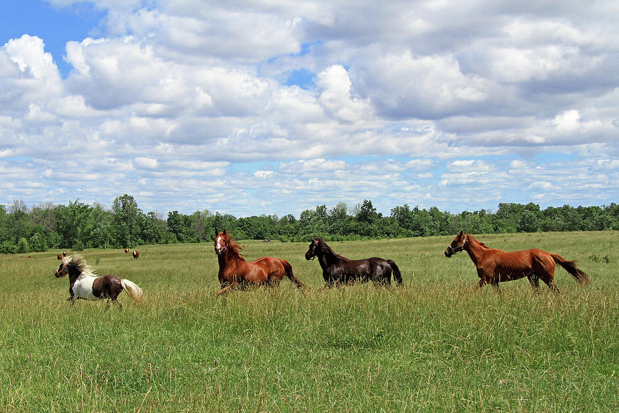 Horse Photograph - Happy Horses by Corrie White Photography