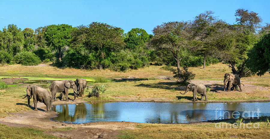 Happy Hour At The Water Hole Photograph