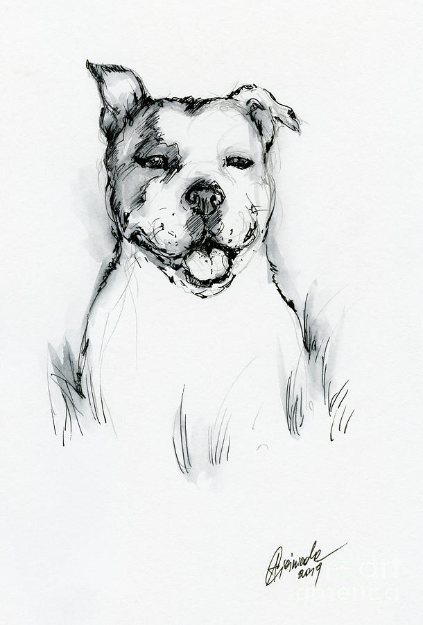 Pit Bull Drawing - Happy Pit Bull by Angel Ciesniarska