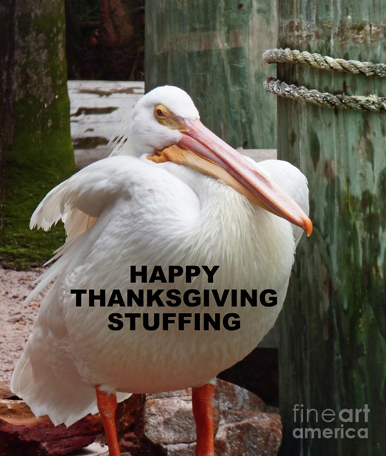 Happy Thanksgiving Stuffing Card 300 Photograph