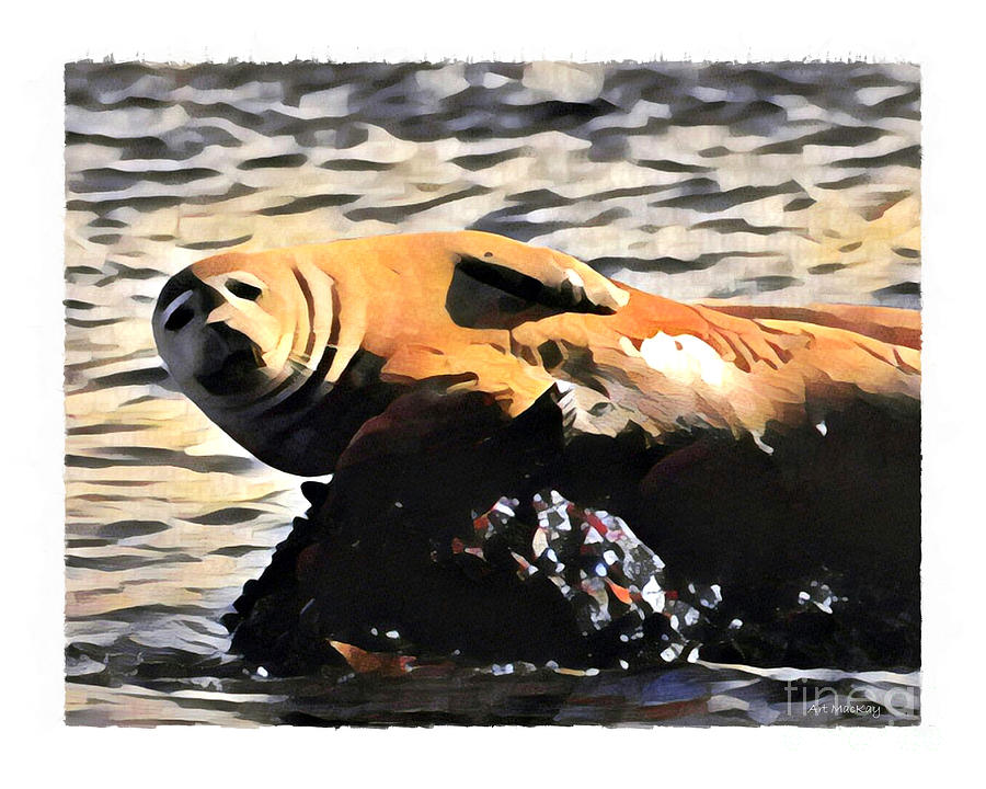Harbor Seal Resting by Art MacKay