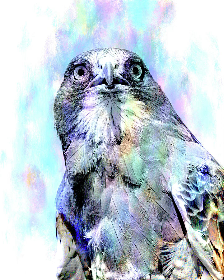 Harris's Hawk Portrait in Blue by Lowell Monke