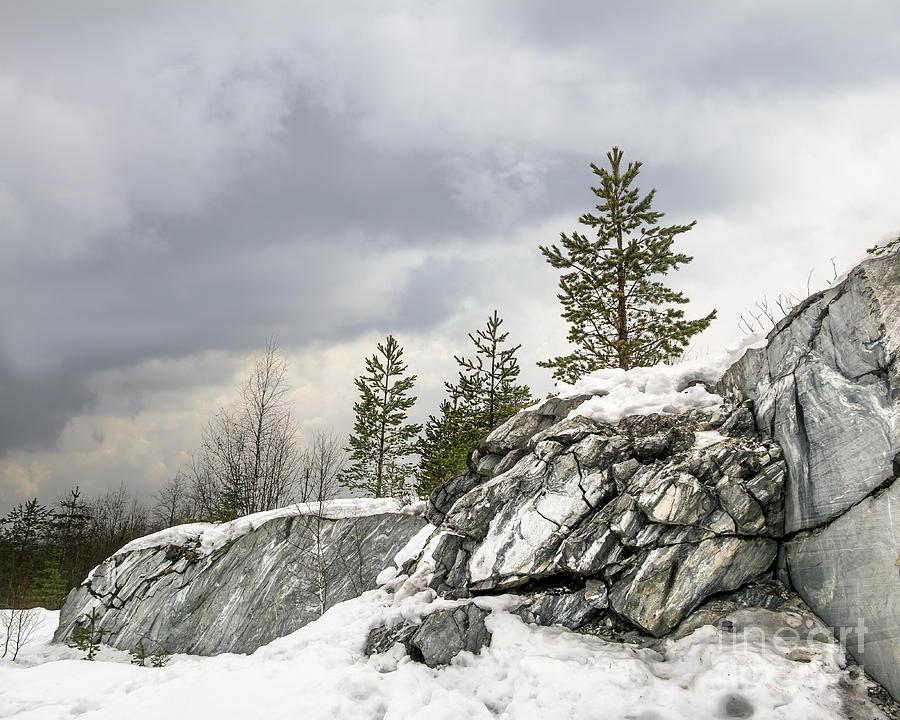 Forest Photograph - Harsh Northern Misty Landscape by Anton Kudelin