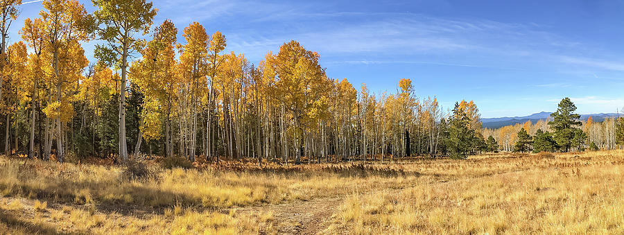 Hart Prairie Fall Panorama by TL Wilson Photography by Teresa Wilson