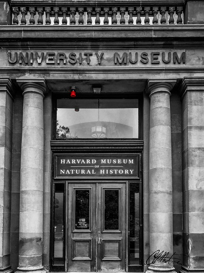Harvard Museum of Natural History by Chris Montcalmo