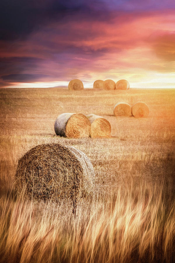 Harvest Hay Bales Scotland  by Carol Japp